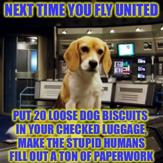 The old dog biscuits in the checked luggage gag | NEXT TIME YOU FLY UNITED PUT 20 LOOSE DOG BISCUITS IN YOUR CHECKED LUGGAGE, MAKE THE STUPID HUMANS FILL OUT A TON OF PAPERWORK | image tagged in captain archer's beagle porthos,united airlines,dog week,tigerleo,dogs,animals | made w/ Imgflip meme maker