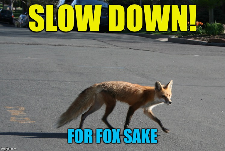 Jiminy crickets! | SLOW DOWN! FOR FOX SAKE | image tagged in memes,what the fox said | made w/ Imgflip meme maker