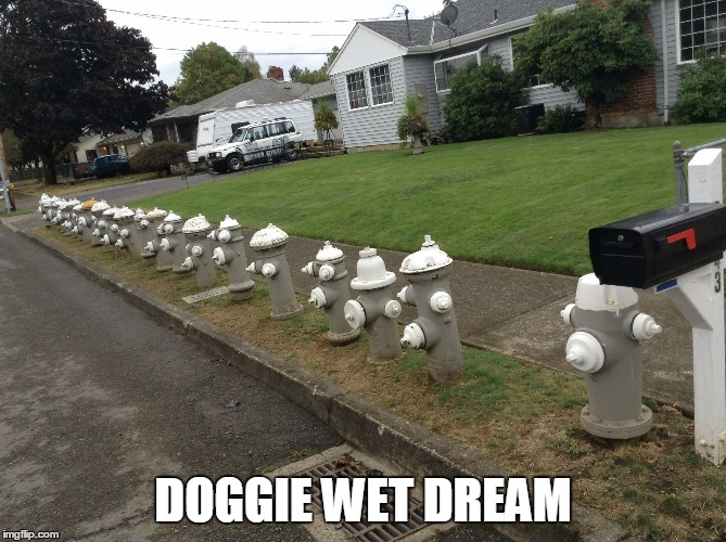 DOGGIE WET DREAM | made w/ Imgflip meme maker
