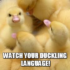 WATCH YOUR DUCKLING LANGUAGE! | made w/ Imgflip meme maker