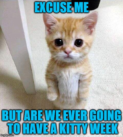 EXCUSE ME BUT ARE WE EVER GOING TO HAVE A KITTY WEEK | made w/ Imgflip meme maker
