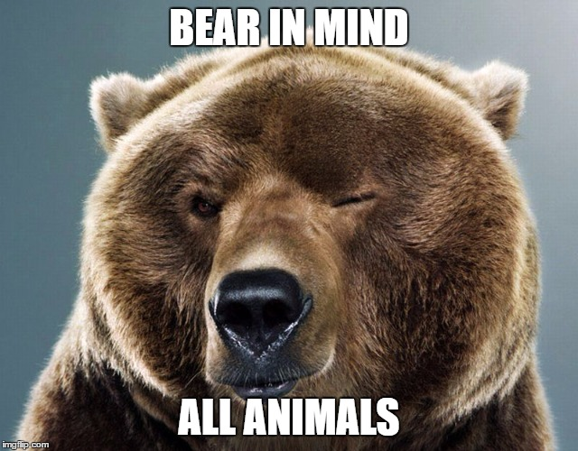 Wink Bear | BEAR IN MIND ALL ANIMALS | image tagged in wink bear | made w/ Imgflip meme maker