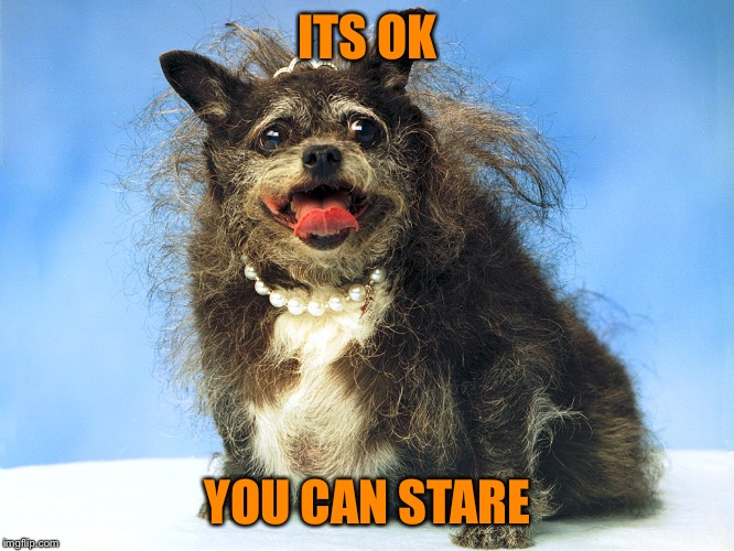 Ugly Dog | ITS OK YOU CAN STARE | image tagged in ugly dog | made w/ Imgflip meme maker
