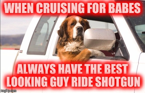 Before we were old enough for the bar scene, we cruised | WHEN CRUISING FOR BABES ALWAYS HAVE THE BEST LOOKING GUY RIDE SHOTGUN | image tagged in dog week,cruising | made w/ Imgflip meme maker