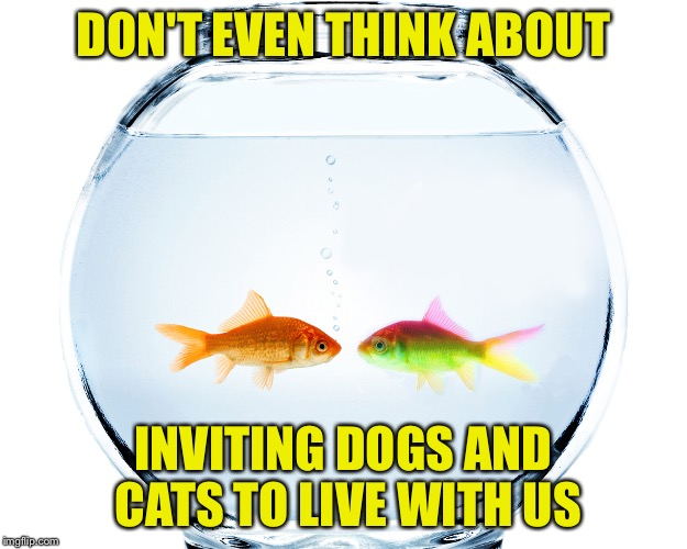 Fishbowl | DON'T EVEN THINK ABOUT INVITING DOGS AND CATS TO LIVE WITH US | image tagged in fishbowl | made w/ Imgflip meme maker