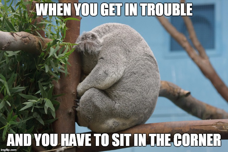 Image tagged in sad koala - Imgflip