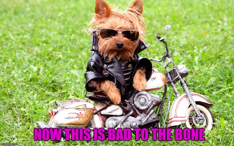 Hasta La Vista Doggy (Dog Week A Tiger.leo Event)  | NOW THIS IS BAD TO THE BONE | image tagged in tigerleo,dog week,hasta la vista doggy | made w/ Imgflip meme maker