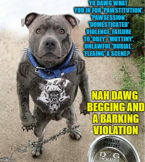 Pitt Bullies in and out of the pound since a young pup True Canine  confessions  |  YO DAWG WHAT YOU IN FOR 'PAWSTITUTION', 'PAWSESSION', 'DOMESTICATED' VIOLENCE, FAILURE TO 'OBEY', 'MUTTINY', UNLAWFUL 'BURIAL', 'FLEAING' A SCENE? NAH DAWG BEGGING AND A BARKING VIOLATION | image tagged in dog week,dogg pound,bad pun dog,memes,dog memes | made w/ Imgflip meme maker