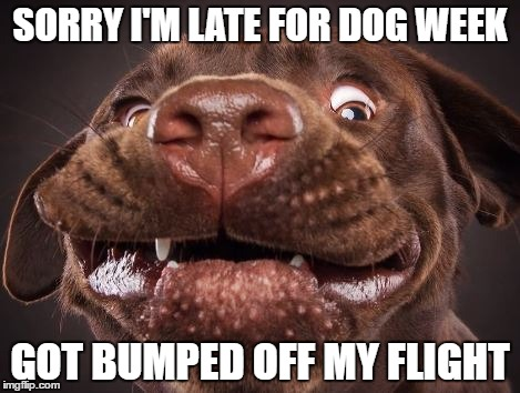 funny pupy | SORRY I'M LATE FOR DOG WEEK GOT BUMPED OFF MY FLIGHT | image tagged in dog week,funny dogs | made w/ Imgflip meme maker