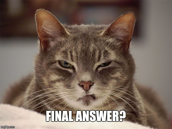 Sarcasm Cat | FINAL ANSWER? | image tagged in sarcasm cat | made w/ Imgflip meme maker