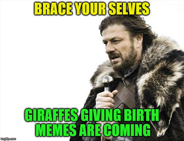 Brace Yourselves X is Coming Meme | BRACE YOUR SELVES GIRAFFES GIVING BIRTH MEMES ARE COMING | image tagged in memes,brace yourselves x is coming | made w/ Imgflip meme maker