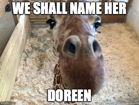 April giraffe | WE SHALL NAME HER DOREEN | image tagged in april giraffe | made w/ Imgflip meme maker