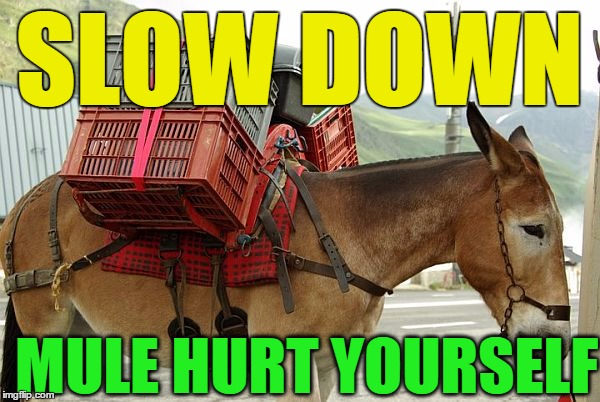 mule | SLOW DOWN MULE HURT YOURSELF | image tagged in mule | made w/ Imgflip meme maker