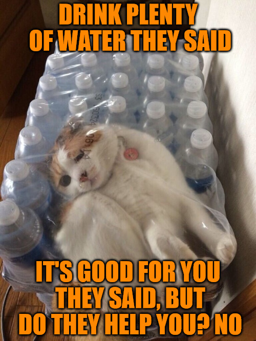 Mock Me Before Helping Human, I Will Claw Your Face Off Tonight | DRINK PLENTY OF WATER THEY SAID IT'S GOOD FOR YOU THEY SAID, BUT DO THEY HELP YOU? NO | image tagged in cats,animals,memes,bottled water,stuck in the moment | made w/ Imgflip meme maker