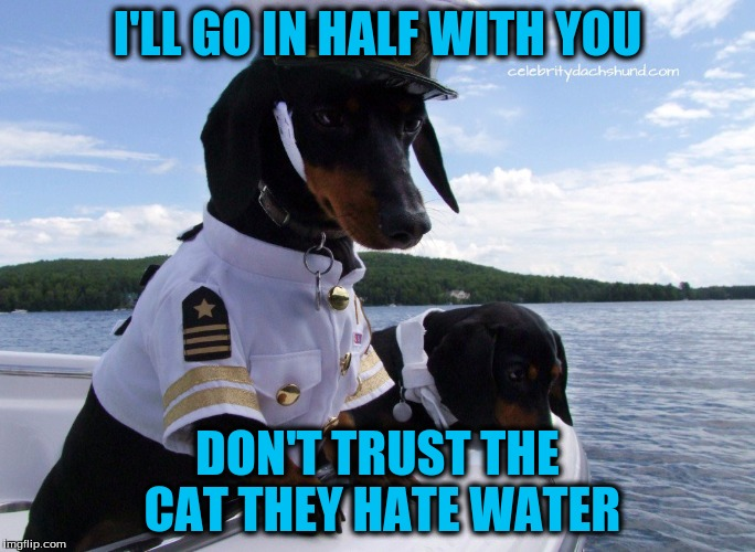 I'LL GO IN HALF WITH YOU DON'T TRUST THE CAT THEY HATE WATER | made w/ Imgflip meme maker