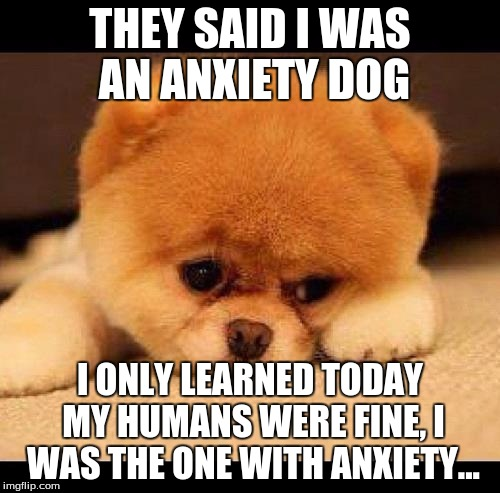 i cri everytiem | THEY SAID I WAS AN ANXIETY DOG I ONLY LEARNED TODAY MY HUMANS WERE FINE, I WAS THE ONE WITH ANXIETY... | image tagged in sad dog,anxiety | made w/ Imgflip meme maker