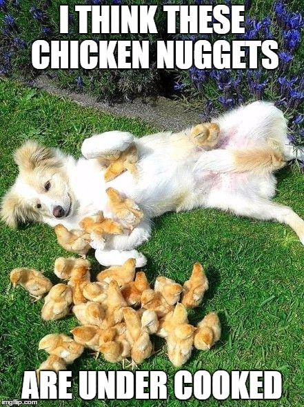 Had to get a few in for dog week | I THINK THESE CHICKEN NUGGETS ARE UNDER COOKED | image tagged in dog week | made w/ Imgflip meme maker