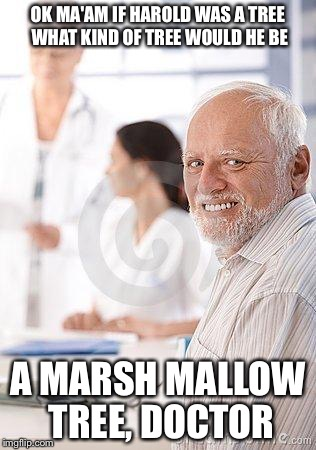 OK MA'AM IF HAROLD WAS A TREE WHAT KIND OF TREE WOULD HE BE A MARSH MALLOW TREE, DOCTOR | made w/ Imgflip meme maker