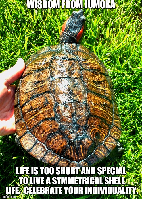 Chelonian Motivation | WISDOM FROM JUMOKA LIFE IS TOO SHORT AND SPECIAL TO LIVE A SYMMETRICAL SHELL LIFE.  CELEBRATE YOUR INDIVIDUALITY. | image tagged in individuality,turtle | made w/ Imgflip meme maker