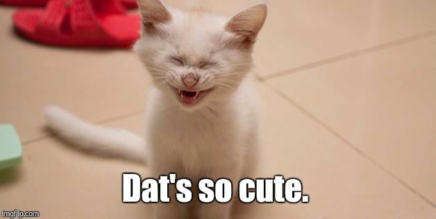Cat Laughing | Dat's so cute. | image tagged in cat laughing | made w/ Imgflip meme maker