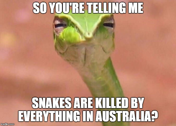 Skeptical snake | SO YOU'RE TELLING ME SNAKES ARE KILLED BY EVERYTHING IN AUSTRALIA? | image tagged in skeptical snake | made w/ Imgflip meme maker
