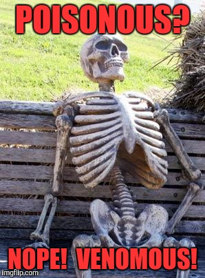 Waiting Skeleton Meme | POISONOUS? NOPE!  VENOMOUS! | image tagged in memes,waiting skeleton | made w/ Imgflip meme maker