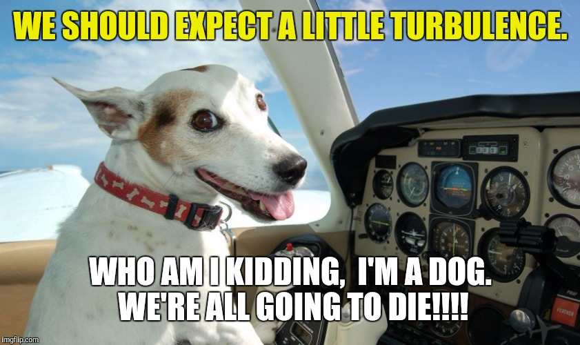 Dog week / United crossover | WE SHOULD EXPECT A LITTLE TURBULENCE. WHO AM I KIDDING,  I'M A DOG. WE'RE ALL GOING TO DIE!!!! | image tagged in dog week,united airlines | made w/ Imgflip meme maker