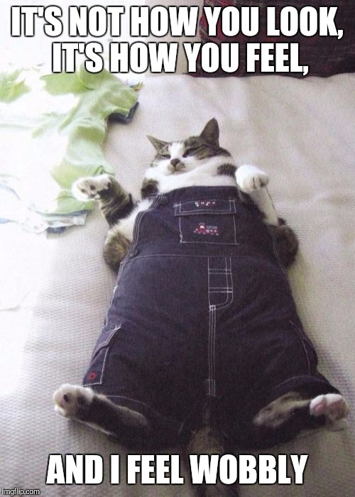 Fat Cat Meme |  IT'S NOT HOW YOU LOOK, IT'S HOW YOU FEEL, AND I FEEL WOBBLY | image tagged in memes,fat cat | made w/ Imgflip meme maker