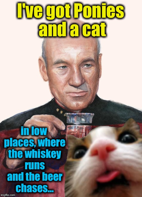 I've got Ponies and a cat in low places, where the whiskey runs and the beer chases... | made w/ Imgflip meme maker