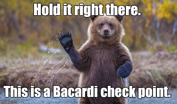 Funny Bear | Hold it right there. This is a Bacardi check point. | image tagged in funny bear | made w/ Imgflip meme maker