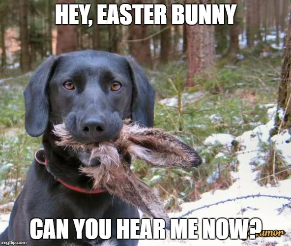 image tagged in easter dead rabbit funny easter imgflip