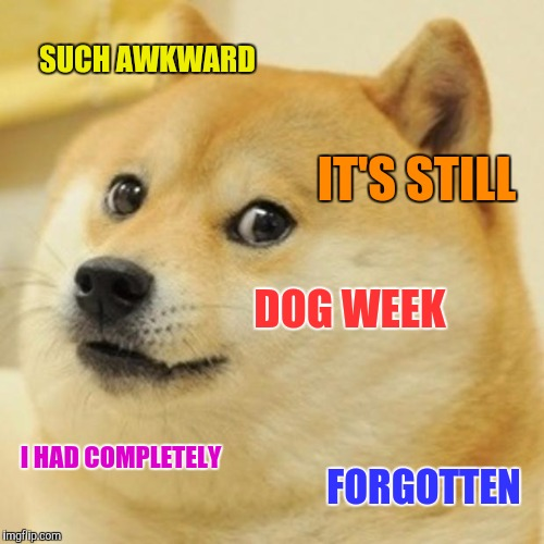 Doge Meme | SUCH AWKWARD IT'S STILL DOG WEEK I HAD COMPLETELY FORGOTTEN | image tagged in memes,doge | made w/ Imgflip meme maker