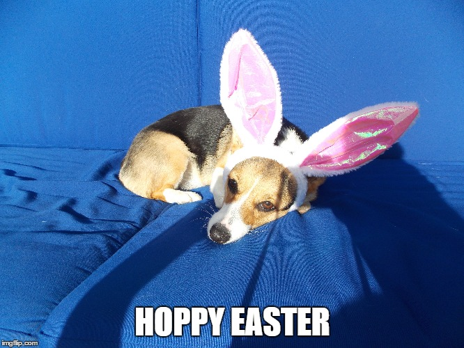 Hoppy Easter | HOPPY EASTER | image tagged in pembroke welsh corgi | made w/ Imgflip meme maker