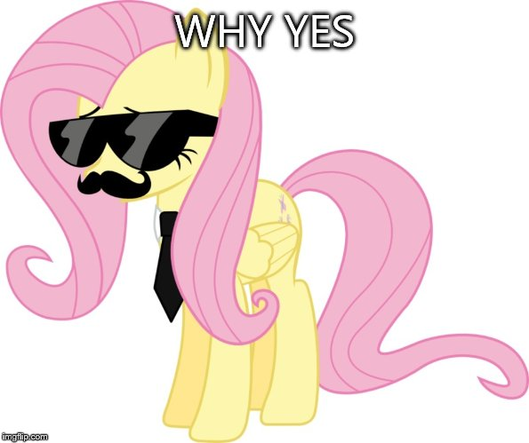 disguised fluttershy | WHY YES | image tagged in disguised fluttershy | made w/ Imgflip meme maker