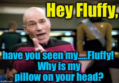 Picard Wtf Meme | Hey Fluffy, have you seen my.....Fluffy! Why is my pillow on your head? | image tagged in memes,picard wtf | made w/ Imgflip meme maker