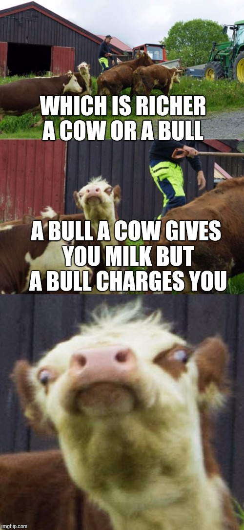 Bad pun cow  | WHICH IS RICHER A COW OR A BULL A BULL A COW GIVES YOU MILK BUT A BULL CHARGES YOU | image tagged in bad pun cow | made w/ Imgflip meme maker