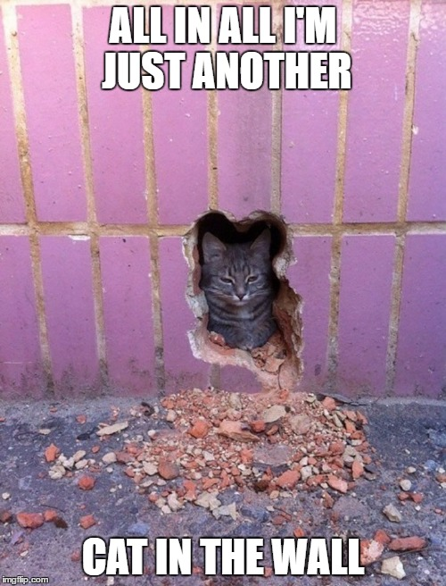 Another cat in the wall  | ALL IN ALL I'M JUST ANOTHER CAT IN THE WALL | image tagged in another cat in the wall,funny cat | made w/ Imgflip meme maker