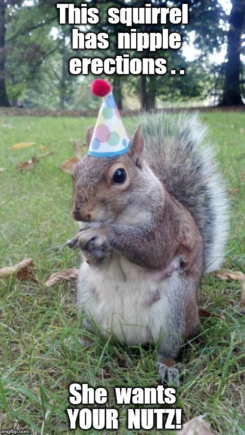 super birthday squirrel meme imgflip