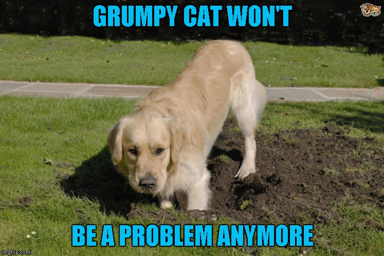 GRUMPY CAT WON'T BE A PROBLEM ANYMORE | made w/ Imgflip meme maker