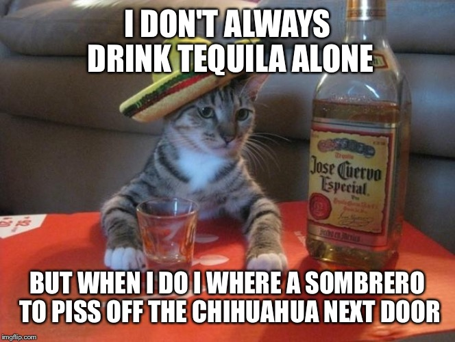Viva tequila chow chihuahua  | I DON'T ALWAYS DRINK TEQUILA ALONE BUT WHEN I DO I WHERE A SOMBRERO TO PISS OFF THE CHIHUAHUA NEXT DOOR | image tagged in memes,cats,funny | made w/ Imgflip meme maker