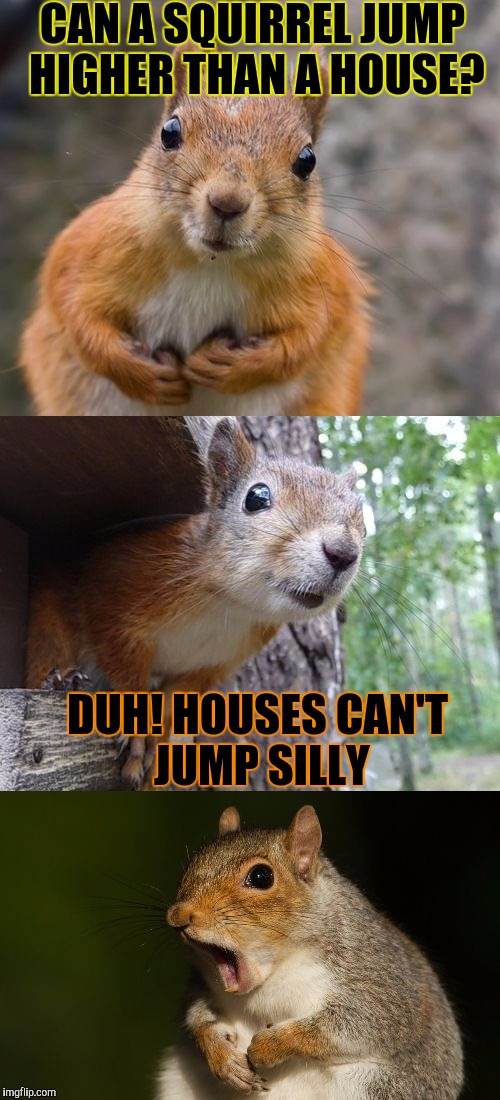 bad pun squirrel | CAN A SQUIRREL JUMP HIGHER THAN A HOUSE? DUH! HOUSES CAN'T JUMP SILLY | image tagged in bad pun squirrel,memes,bad joke,funny | made w/ Imgflip meme maker