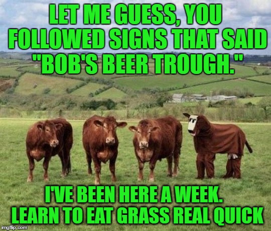 "LET ME GUESS, YOU FOLLOWED SIGNS THAT SAID ""BOB'S BEER TROUGH."" I'VE BEEN HERE A WEEK.  LEARN TO EAT GRASS REAL QUICK 