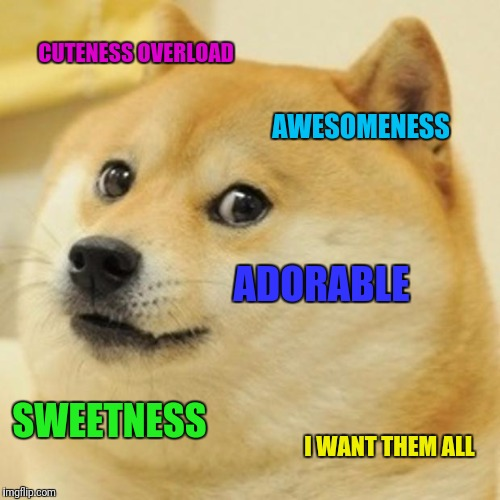 Doge Meme | CUTENESS OVERLOAD AWESOMENESS ADORABLE SWEETNESS I WANT THEM ALL | image tagged in memes,doge | made w/ Imgflip meme maker