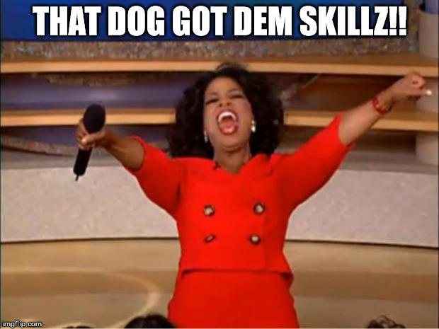 Oprah You Get A Meme | THAT DOG GOT DEM SKILLZ!! | image tagged in memes,oprah you get a | made w/ Imgflip meme maker