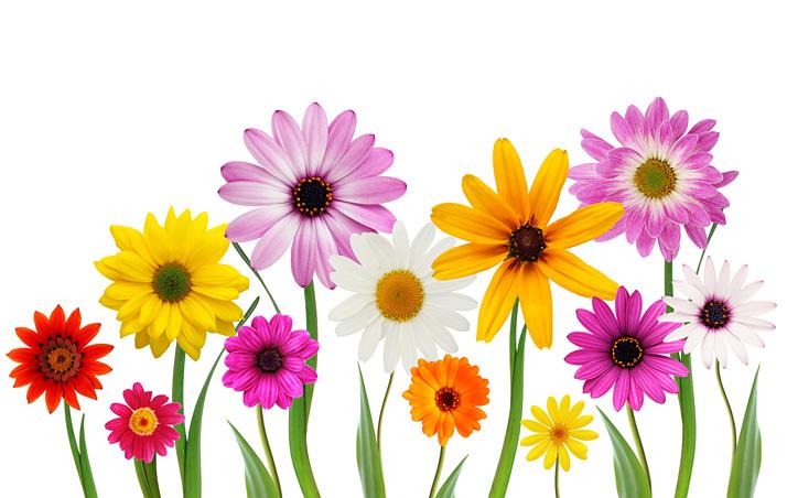 spring flowers blank template imgflip