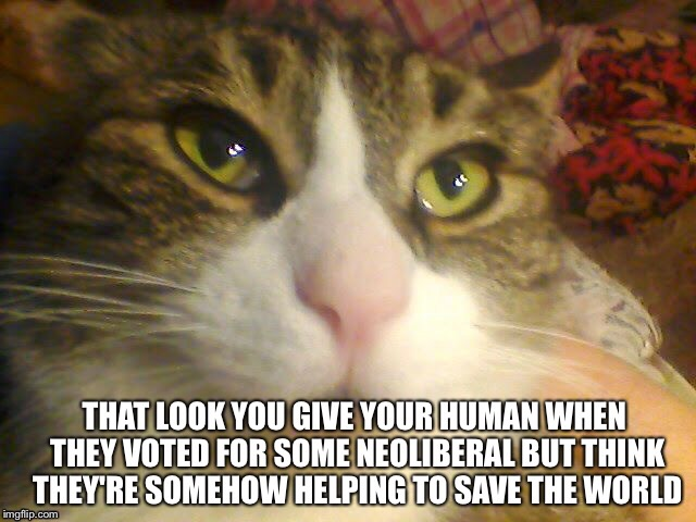 That look when... | image tagged in cat,neoliberalism,save the world,human | made w/ Imgflip meme maker