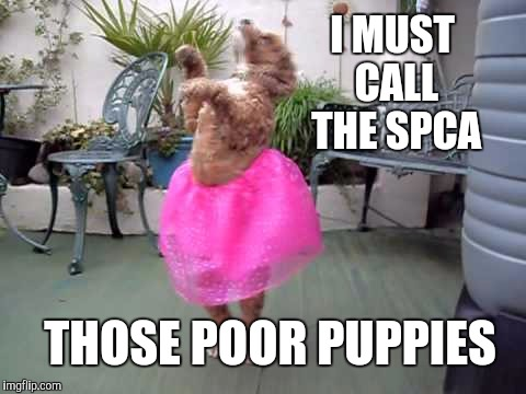 I MUST CALL THE SPCA THOSE POOR PUPPIES | made w/ Imgflip meme maker