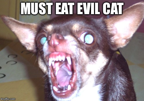 MUST EAT EVIL CAT | made w/ Imgflip meme maker