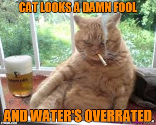 CAT LOOKS A DAMN FOOL AND WATER'S OVERRATED | made w/ Imgflip meme maker