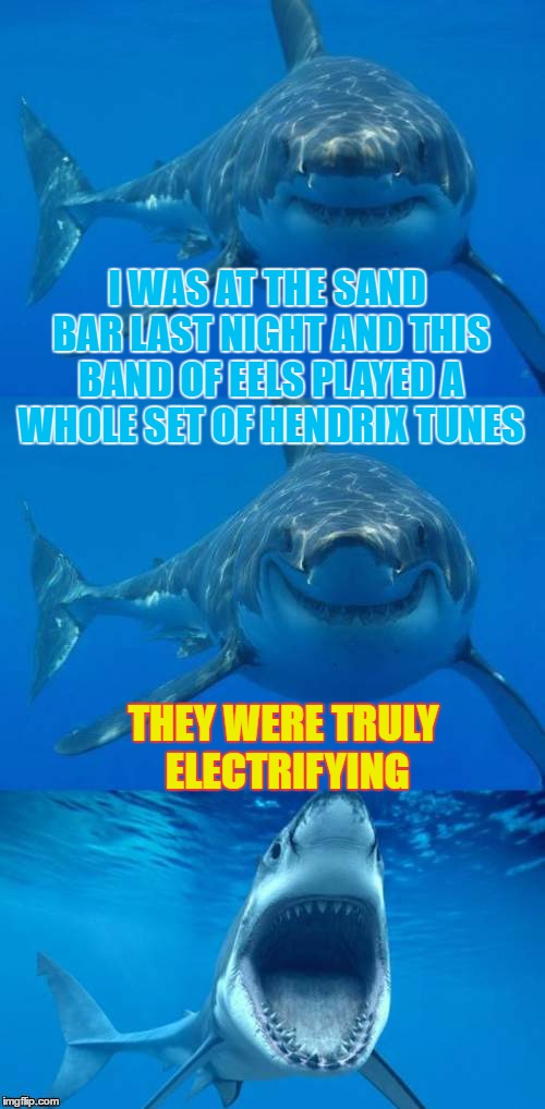 Bad Pun Shark Its Electric | I WAS AT THE SAND BAR LAST NIGHT AND THIS BAND OF EELS PLAYED A WHOLE SET OF HENDRIX TUNES THEY WERE TRULY ELECTRIFYING | image tagged in bad shark pun,memes,jaws,electric eels,puns,sharks | made w/ Imgflip meme maker